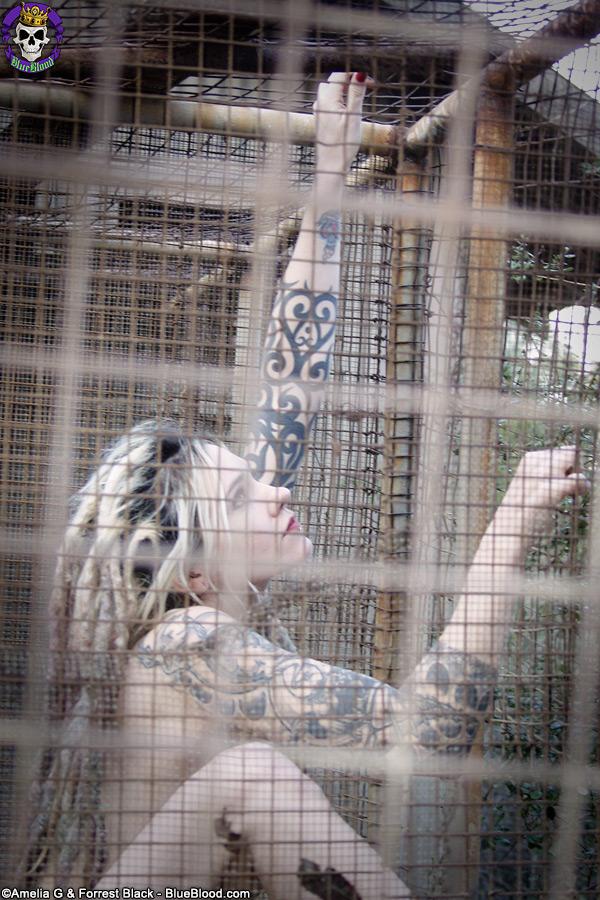 Voltaire Bird Cage